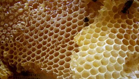 موم عسل را نخورید، چون…