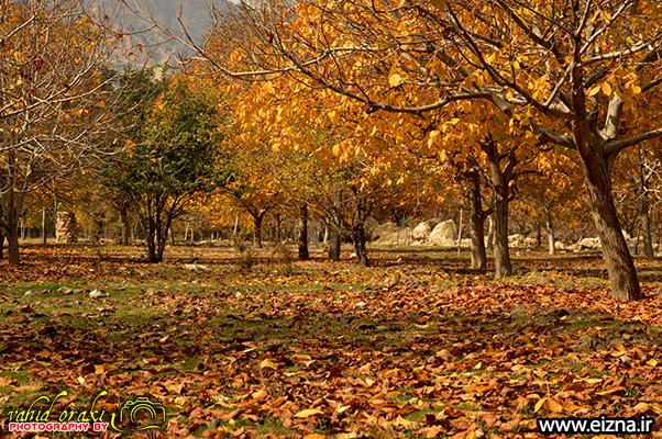 پاییز در همین حوالی، گزارش تصویری «فصل هزار رنگ» در شهرستان ایذه