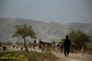 عکس از وحید اورکی