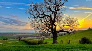 درخت، سرسبزی، بلوط