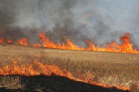 ۳ هکتار از زمینهای کشاورزی ایذه طعمه آتش شد