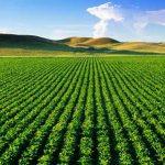 نخستین مرکز آموزشی و پژوهشی گیاهان دارویی در شمال خوزستان راهاندازی میشود