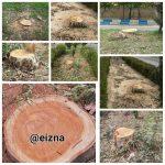 در ایذه، درختان را سر بریدند/به جای توسعه فضای سبز سرانه را کاهش ندهید!