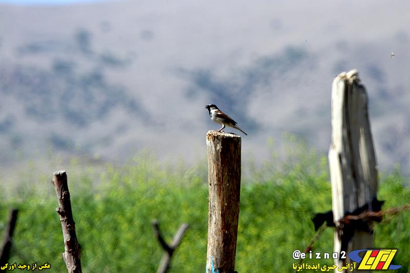طبیعت زیبای دشت سوسن میزبان مسافران طبیعت دوست / گزارش تصویری