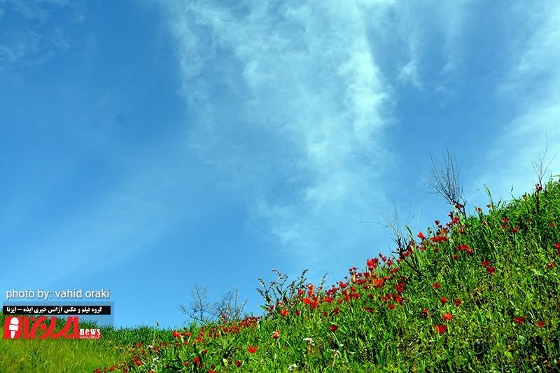 طبیعت زیبای بهاری دشت سوسن، عکاس وحید اورکی