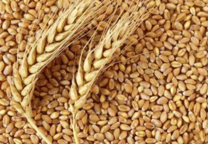فقدان باسکول چند تن در سوسن و هزار مصیبت کشاورزان