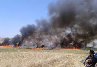 ۷ هکتار از مزارع کشاورزی روستای شهرک طالقانی هلایجان در آتش سوخت
