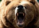مجروحیت جوان ایذهای در پی حمله خرس