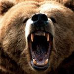حمله خرس به دو روستایی در ایذه