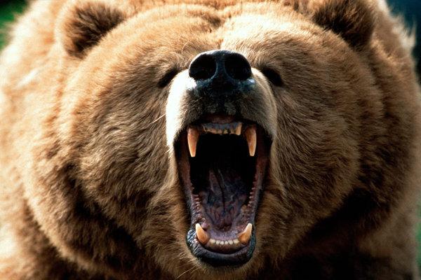 حمله خرس به یک روستا در ایذه دو کشته و مجروح برجای گذاشت