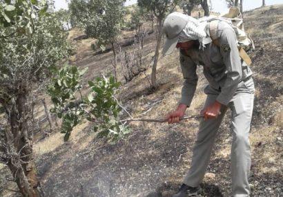 ۴ هکتار از مراتع منطقه حفاظت شده منگشت، سادات حسینی ایذه در آتش سوخت/برخورد قانونی با آتشزنندگان کاه و کلش