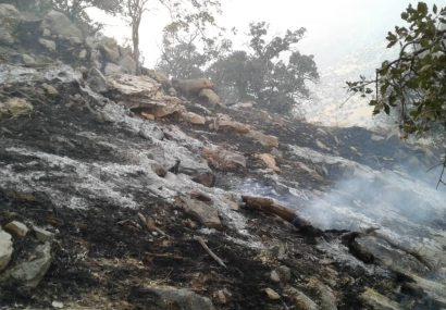 منطقه حفاظت شده کوه گزیر ایذه دچار آتشسوزی شد